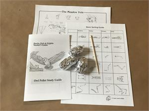 Owl Pellet Mini-Kit