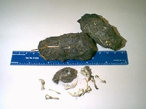 Extra Large Owl Pellets