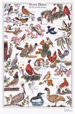 State Birds of the U.S. Chart